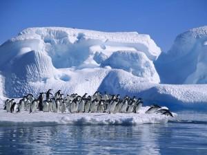 Adelie_Penguins_in_Hope_Bay_Antarctica